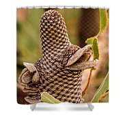 Banksia Cone 2 Shower Curtain