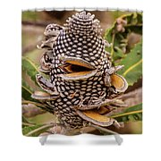 Banksia Cone Shower Curtain