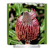 Banksia In Red Shower Curtain