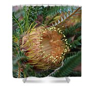 Banksia Nivea - 2 Shower Curtain