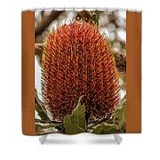 Banksia Serrata 2 Shower Curtain