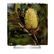 Banksia Syd01 Shower Curtain