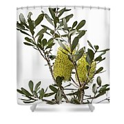 Banksia Syd02 Shower Curtain