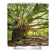 Banyan Star Shower Curtain