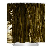 Banyan Surfer - Triptych  Part 1 Of 3 Shower Curtain