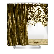 Banyan Surfer - Triptych  Part 2 Of 3 Shower Curtain