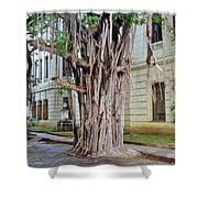 Banyan Tree Shower Curtain