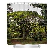 Banyon Monkeypod Landscape II Shower Curtain
