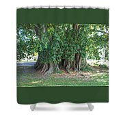 Banyon Tree Shower Curtain