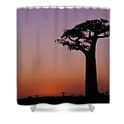 Baobab At Sunset Shower Curtain