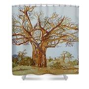 Baobab Tree Of Africa Shower Curtain
