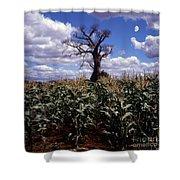 Baobaba Tree Shower Curtain