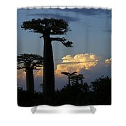 Baobabs And Storm Clouds Shower Curtain