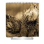 Barbed Beauties Shower Curtain