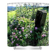 Barbed Wire And Roses Shower Curtain