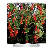Barberries Shower Curtain