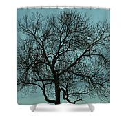Bare Branches And Storm Clouds Shower Curtain