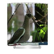 Bare Eyed Pigeon Shower Curtain