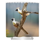 Bare-faced Go-away-birds Corythaixoides Shower Curtain