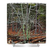 Bare Tree And Boulders In Mark Twain Forest Shower Curtain