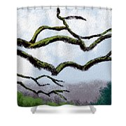 Bare Tree Branches Shower Curtain