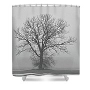 Bare Tree In Fog Shower Curtain