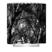 Bare Trees II Shower Curtain