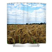 Barley And Sky In Oulu, Finland. Shower Curtain