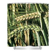 Barley, Green Stage Shower Curtain