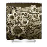 Barn And Sunflowers In Sepia Tone Shower Curtain