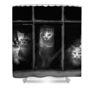 Barn Cats Shower Curtain