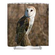 Barn Owl 2 Shower Curtain