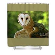 Barn Owl-6553 Shower Curtain