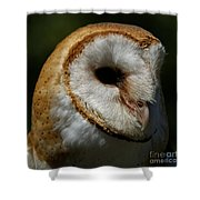Barn Owl - Face Of A Beauty Shower Curtain by Sue Harper