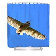 Barn Owl Flight Shower Curtain