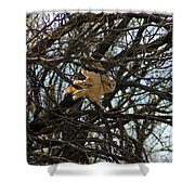 Barn Owl In A Tree Shower Curtain