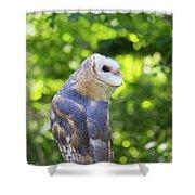 Barn Owl Looking Skyward Shower Curtain