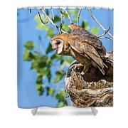 Barn Owl Owlet Climbs Out Of Nest Shower Curtain