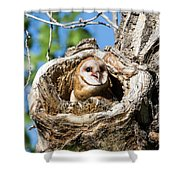 Barn Owl Owlet Says Hello To The World Shower Curtain