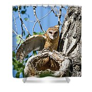 Barn Owl Owlet Stretches Shower Curtain