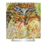 Barn Owl Thinking Shower Curtain