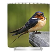 Barn Swallow Shower Curtain