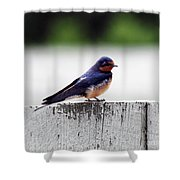 Barn Swallow At Fort Larned Shower Curtain