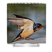 Barn Swallow Shower Curtain by Byron Varvarigos