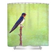 Barn Swallow, Hirundo Rustica Shower Curtain
