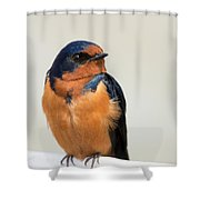 Barn Swallow Perched On A Fence Shower Curtain
