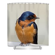 Barn Swallow Perched On A Fence Watching Shower Curtain