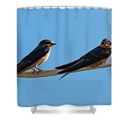Barn Swallows  Shower Curtain