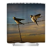 Barn Swallows On Barbwire Fence Shower Curtain