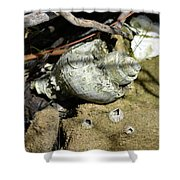 Barnacles And Crabs Shower Curtain